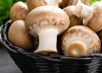 کاهش خطر ابتلا به سرطان پروستات با مصرف قارچ