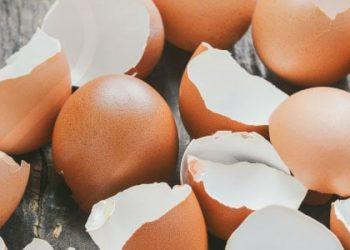 آیا پوسته های خرد شده تخم مرغ به ترمیم آسیب های استخوانی کمک می کنند؟