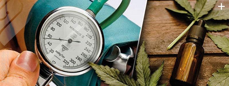 10 گیاه دارویی که به کاهش فشار خون بالا کمک می کنند